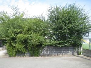 〜使っていないお庭スペースの有効活用!〜大牟田市